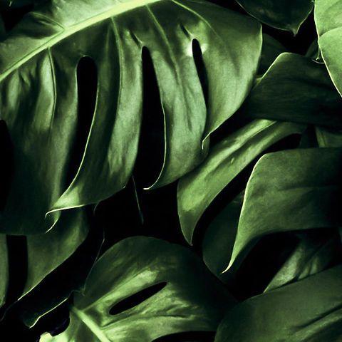 Un nuovo modo di concepire e vivere il verde