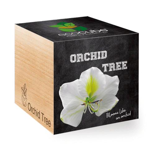 EcoCube • Albero delle orchidee