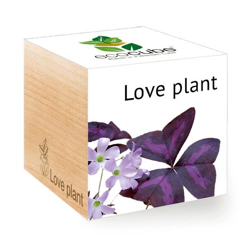 EcoCube • LovePlant
