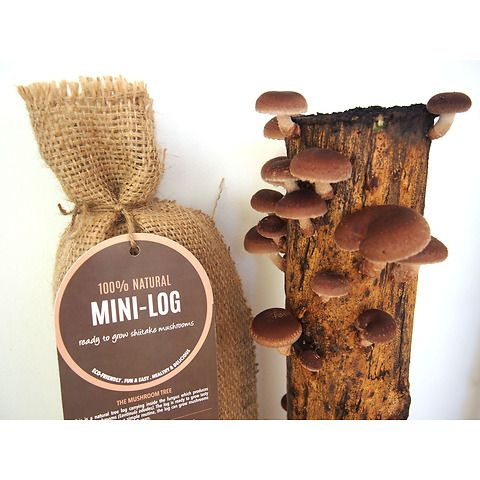 Mushi Mini-Log