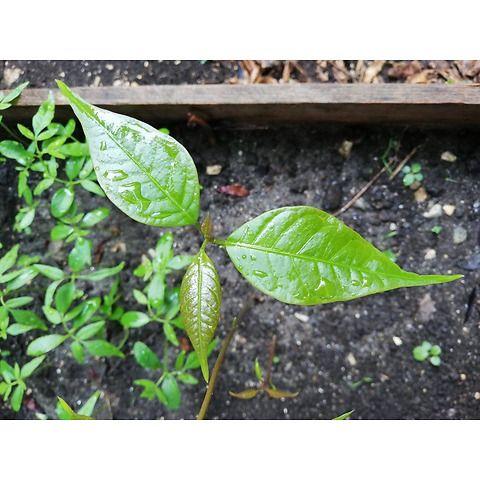 Zero Co2 | Eco-compensa il tuo impatto ambientale