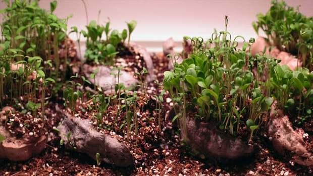 Seedbom Growing Time-lapse